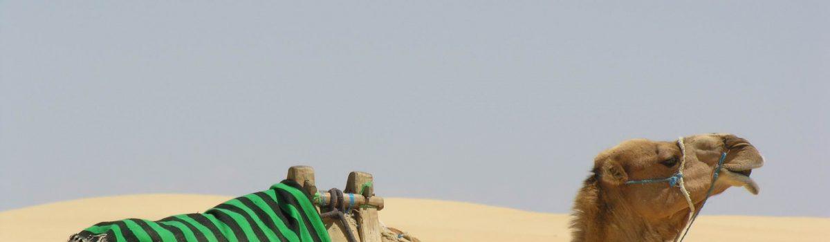 Raid 4×4 Tunisia 2012 – Esploratori 4×4 by Giorgio Antoci
