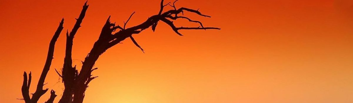 Colori di Sabbia – Tour Namibia 2010 – Viaggi e Raids 4×4 di Dario Basile